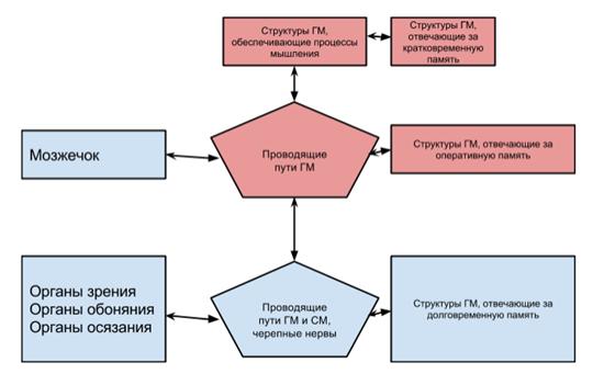 Сравнение архитектуры нервной системы и архитектуры компьютера