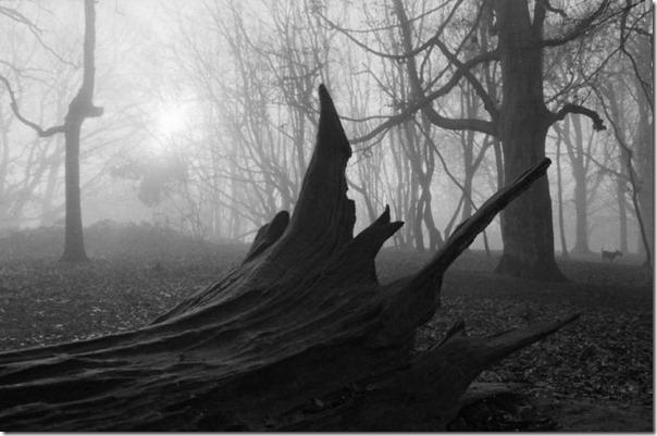 Florestas sombrias (2)