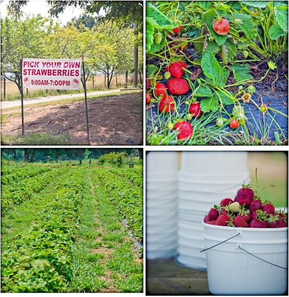 strawberry--2