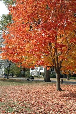 Lexington Centerの紅葉