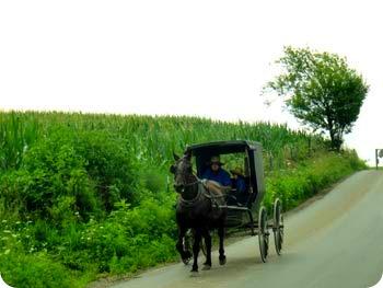 3-buggy