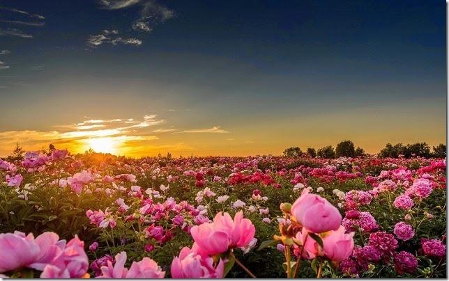 primavera amazing-spring