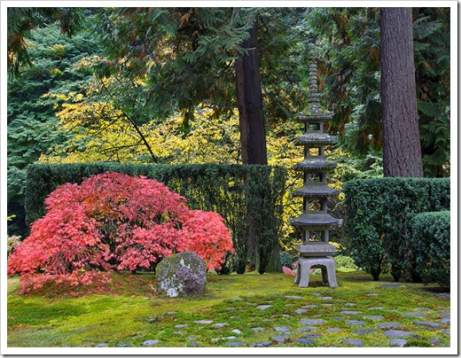 Succulents and more portland japanese garden in the fall part 1 Cleansing concepts garden city