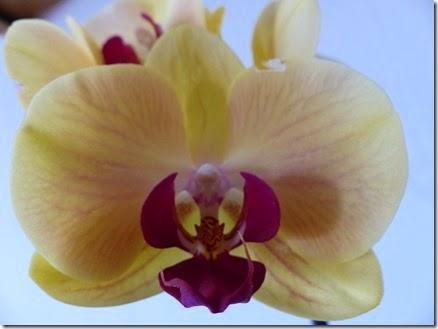 2015_04 Orchideen (13)