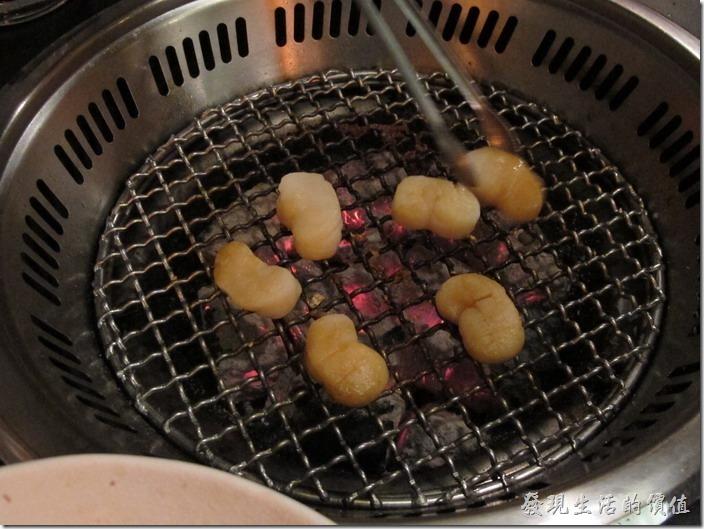 台南-舞飛日式燒烤。大干貝烤到縮成三分之一就可以吃了。