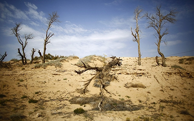 Dead trees are seen near the dried up Shiyang river on the outskirts of Minqin town, Gansu province, one of China's driest regions. Residents say the problem is not new, with the nearby Shiyang river disappearing not because of temperature rises, but because a vast upstream reservoir built two decades ago to irrigate a large farm cut off their supply. Photo: Reuters