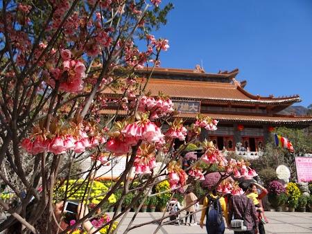 Po Lin Lantau