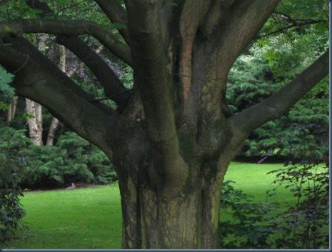 japanischer Garten und Rheinauen 048