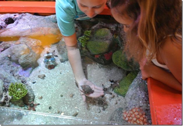 Sea Life Aquarium 231