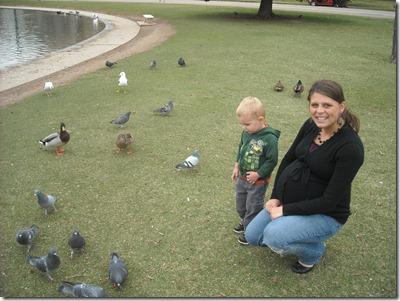 Ducks at Sugarhouse