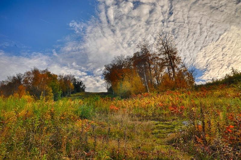 fall--11