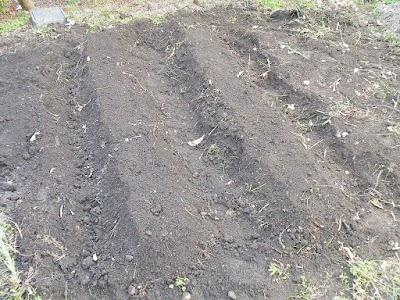 畝をつくってオクラを直播きする