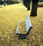leaves-bench