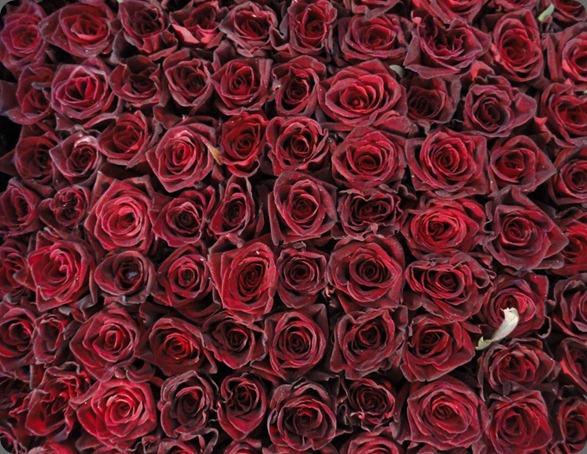307677_213368825392382_1936769829_n laura kuy flowers