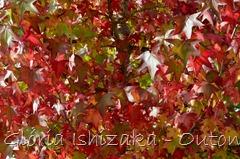 3 - Glória Ishizaka - Folhas de Outono