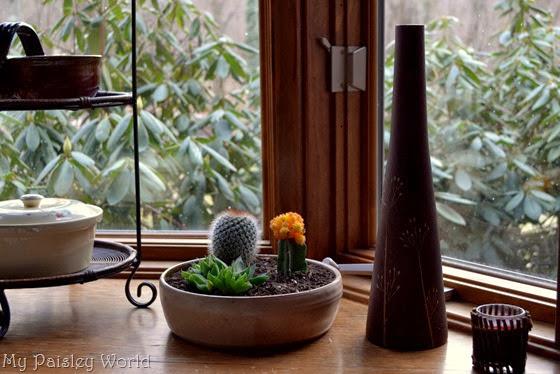 succulent11