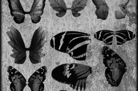 Pinceles de alas de mariposa