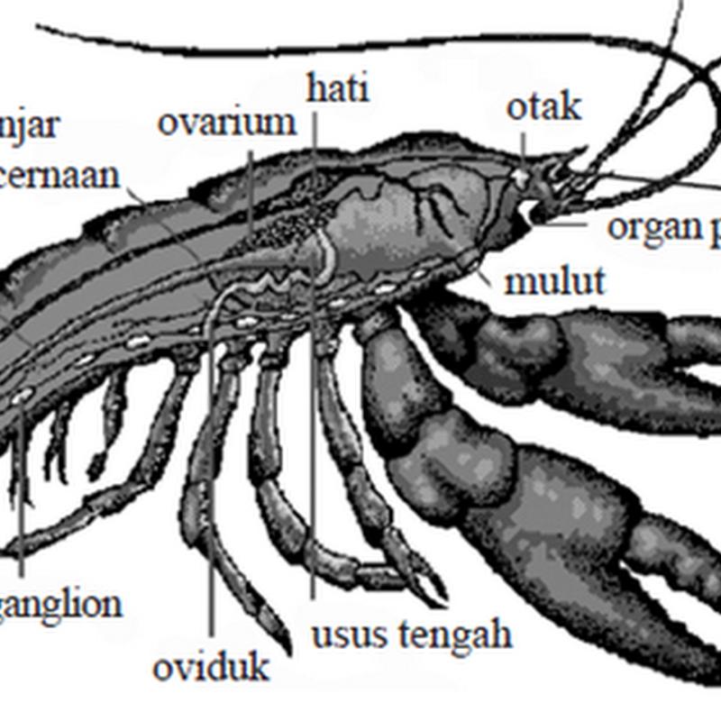 Mengenal filum Arthropoda (lengkap)
