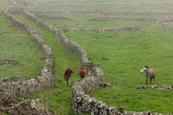 Camino de Jinama entre muros en la meseta de Nizdafe, San Andrés,  El Hierro, Canarias