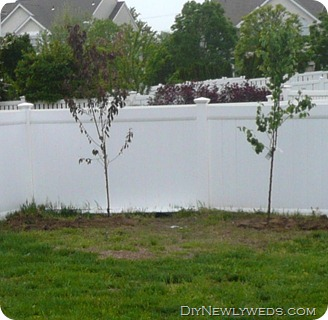 semi-dwarf-peach-tree