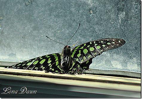 FPC_Butterfly_Green_Spots