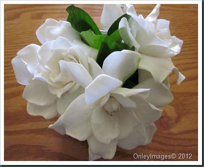 gardenia0614 (2)