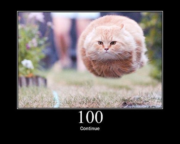 HTTP-Status-Cats-01