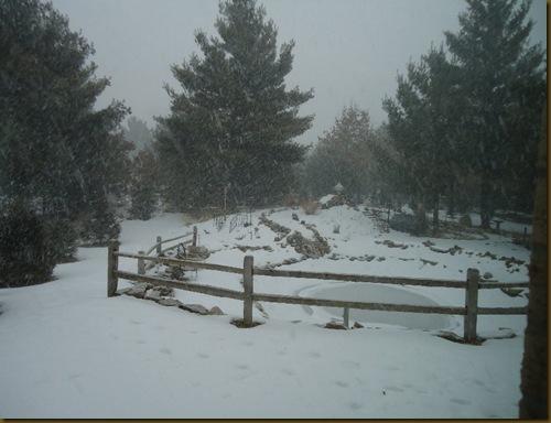 Snowy mornng 1