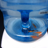 Goldfish Prank