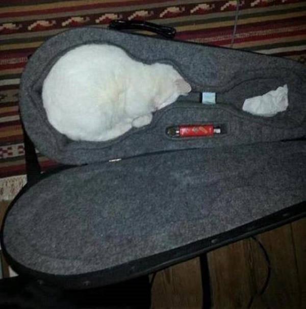 Os gatos não são muito bons em esconde-esconde 13