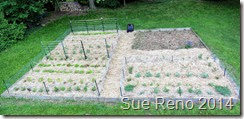 Vegetable garden in progress, image 4, by Sue Reno