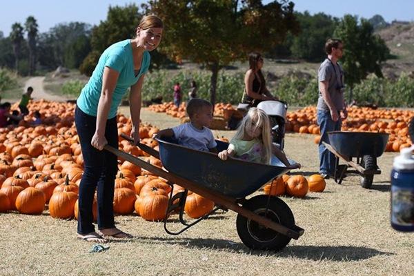pumpkins-10