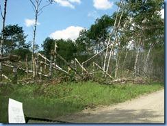 2210 Manitoba Lake Audy Rd West Riding Mountain National Park - recent tree damage