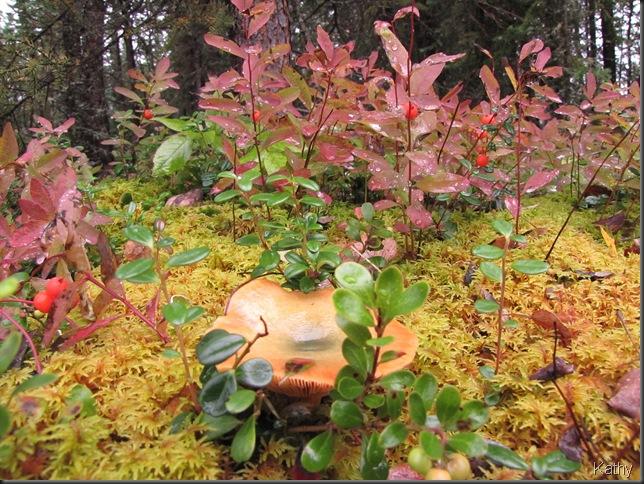 Mushroom in amongst Bastard Toadflax