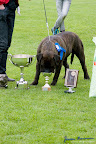 20100513-Bullmastiff-Clubmatch_31195.jpg