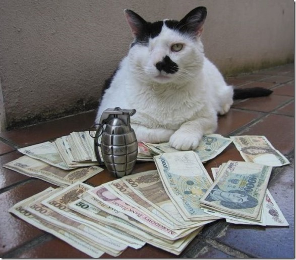 rich-wealthy-cats-22