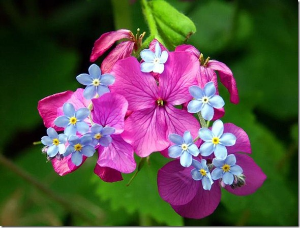 flores-facebook-tumblr-rosas-las flores-fotos de flores-731