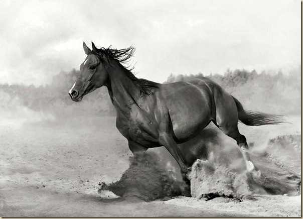 Cheval (5)
