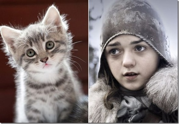 cats-game-thrones-10