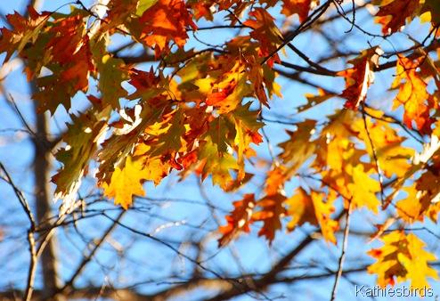 13. golden oaks-kab