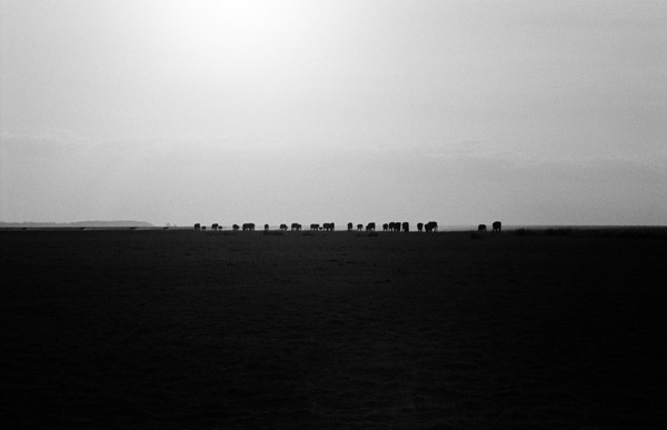 The world's largest land animal looms small in the distance. Africa's elephant poaching crisis doesn't just threaten a species, but imperils one of humanity's most important links to the natural world and even our collective sanity, according to acclaimed photographers and film-makers, Cyril Christo and Marie Wilkinson. Photo by: Cyril Christo and Marie Wilkinson