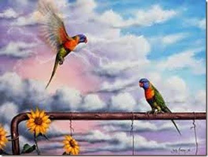 JM birds