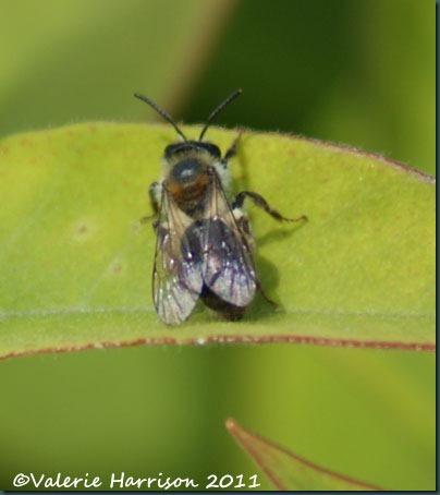 mining bee 1