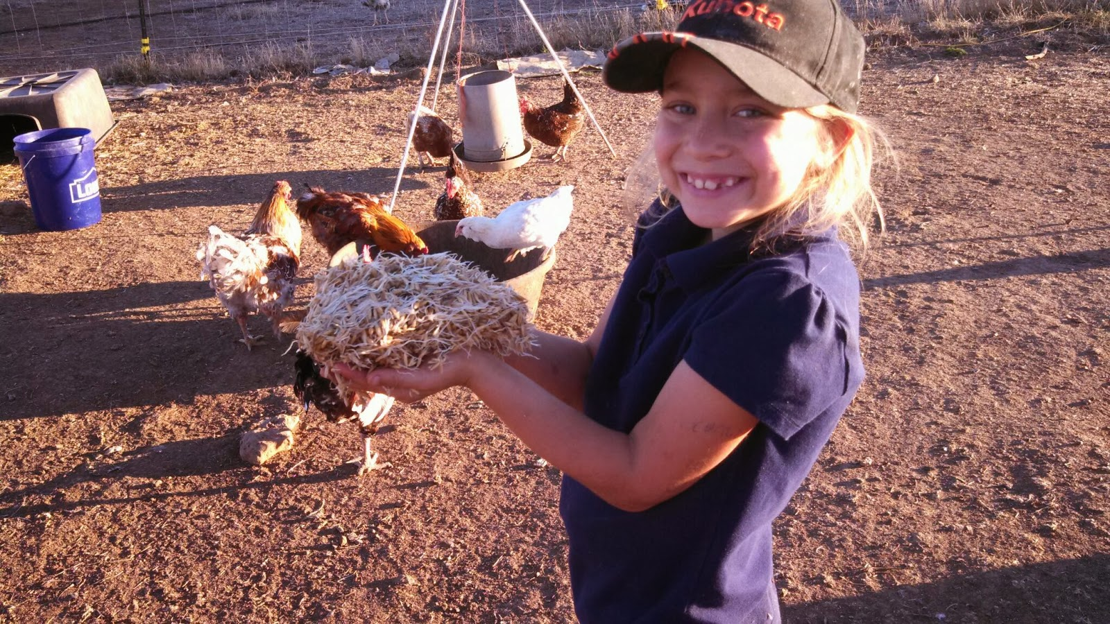 how to raise mealworms at home
