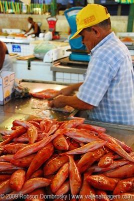 mercado de peixe em recife
