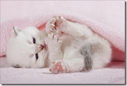 Fotos de gato buscoimagenes (38)