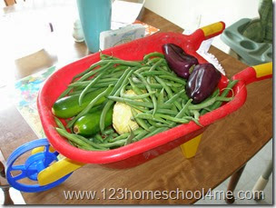 Harvesting vegetables from a kids garden