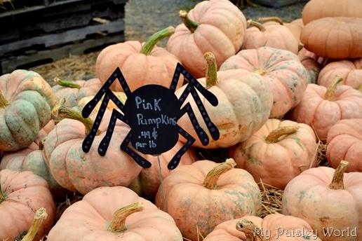 pumpkinblog6