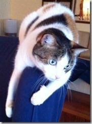 terza età gatto giacomina
