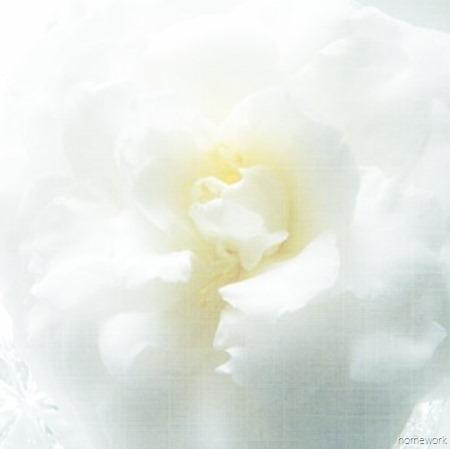 Flower Printable White Camellia_thumb[4]